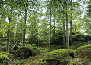 The Jizera Mountains Protected Landscape Area