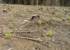 The Czech National Forest Programme II - A Cautious Optimism