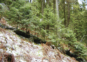 Natural Processes, Disturbances and Forest Management in the High Tatras National Park, Slovakia
