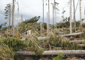 Hurricane Kyrill and Natura 2000 Sites in the Šumava/Bohemian Forest National Park