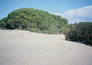 The Doñana National Park