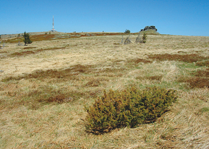 Actual situation of alpine juniper (Juniperus communis subsp. alpina (Smith) Čelakovský) and its per