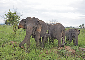 Májsky J.: What is Wrong with National Parks in Southern Sri Lanka?