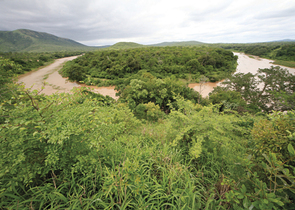 Pelc F.: The Hluhluwe-iMfolozi Park. Due to its Dramatic History, the Oldest Africas Protected Area