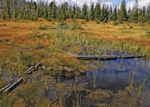 Bufková I.: Improving Disturbed Water Regime in Peat-bogs in the Šumava/Bohemian Forest Mts. Nationa