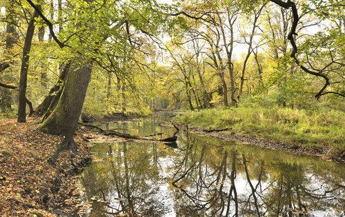 Lußn° lesy  v biosferickā rezervaci Unesco na soutoku Dyje a Moravy  Foto Zdenōk Patzelt